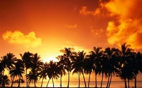 Обои Пальмы, облака, закат