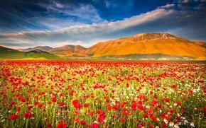 Картинка поле, небо, горы, маки, луг, Италия, italy, umbria, castelluccio di norcia