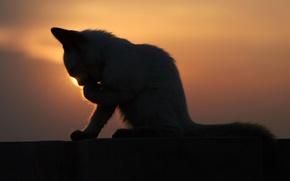 Картинка закат, котенок, умывается