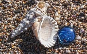 Картинка песок, макро, ракушки, морской