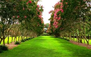 Картинка деревья, парк, весна, trees, ряды, park, Spring, flowering
