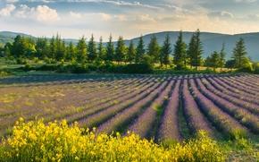 Картинка цветы, пейзаж, природа, лаванда, поле, небо, фиолетовые цветы, весна
