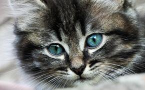 Картинка глаза, кот, усы