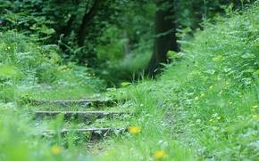 Картинка трава, деревья, цветы, парк, ступени