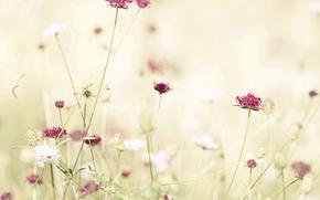 Обои цветок, свет, красный