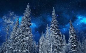 Картинка зима, небо, снег, деревья, ночь, природа, звёзды, ели, мороз, Nature, sky, trees, night, winter, snow, …