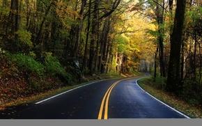 Обои природа, деревья, листья, дорога