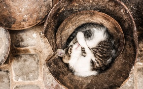 Обои colors, cat, sleeping, pot