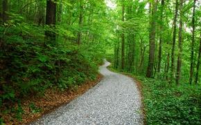 Обои дорога, парк, лес, природа