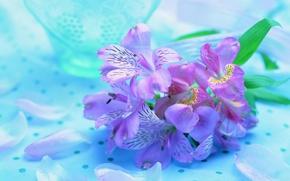 Картинка цветы, красота, букет, лепестки
