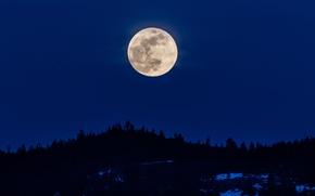 Картинка деревья, луна, вечер, силуэты