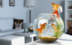 Обои корм, аквариум, рыбки