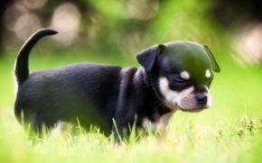 Картинка свет, собака, щенок