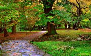 Картинка деревья, парк, Осень, дорожка, аллея, листопад, trees, nature, park, autumn, leaves, path, fall