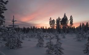 Картинка зима, лес, снег, деревья, закат, Финляндия, Лапландия