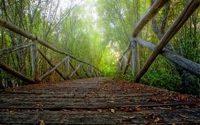 Картинка осень, лес, листья, деревья, природа, парк, HDR, hdr, прогулка, forest, road, trees, nature, park, autumn, …