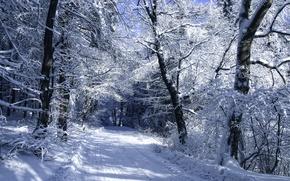 Zima sneg doroga les derevya 1998