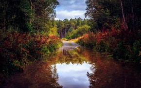 Картинка дорога, осень, лес, вода, деревья, природа, отражение, лужа
