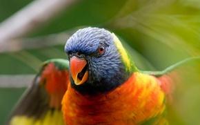 Картинка Птица, размытость, попугай