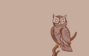 Картинка сова, птица, минимализм, ветка, светлый фон, owl