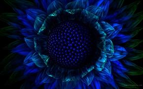 Обои цветок, синий, графика
