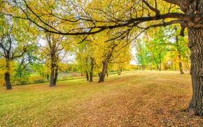 Обои трава, деревья, парк, осень, листья
