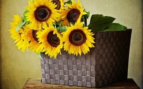 Картинка подсолнухи, цветы, корзина