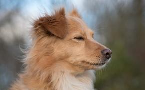 Картинка взгляд, друг, собака