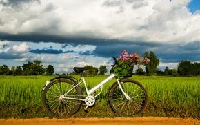 Картинка зелень, небо, трава, листья, деревья, велосипед, фон, widescreen, обои, настроения, колесо, wallpaper, цветочки, bicycle, корзинка, …