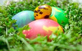 Картинка зелень, космос, макро, яйца, пасха, гнездо, space, eggs, easter, крашенные яйца