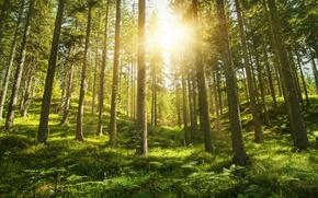 Картинка лес, лето, солнце, природа
