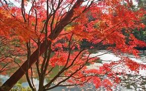 Обои Деревья, красный, осень, Листья, Вода