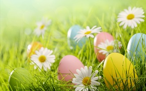 Обои трава, поляна, ромашки, яйца, Пасха, flowers, spring, Easter, eggs