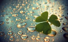 Картинка дождик, капли, клевер