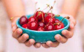 Картинка food, fruit, hands, cherries, bowl, freshness, healthy food