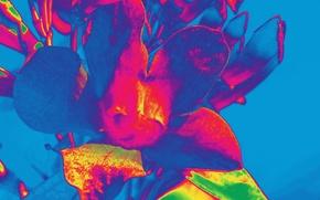Картинка цветок, краски, лепестки, объем