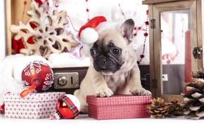 Картинка шарики, игрушки, собака, подарки, щенок, шишки, колпак, французский бульдог