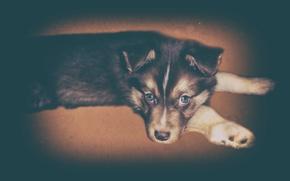 Картинка взгляд, друг, щенок, собачка, фильтр