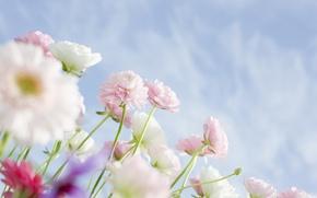 Картинка облака, растения