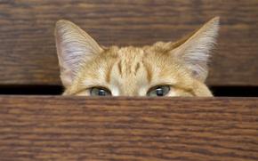 Картинка кошка, дом, шкаф