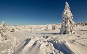 Картинка зима, поле, небо, снег, дерево, ель