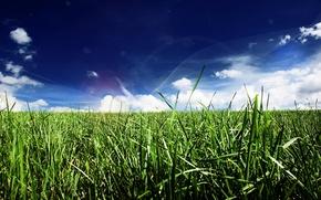 Обои трава, линии, облака