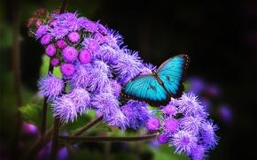 Картинка цветок, тропики, обои, бабочка, крылья, экзотика