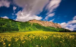 Картинка облака, цветы, горы, луг, Колорадо, Colorado, Crested Butte Mountain Resort