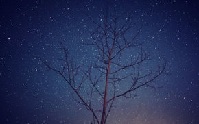 Картинка космос, звезды, деревья, ночь, ветви