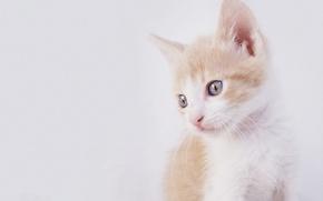 Картинка кошка, текстура, котёнок