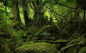 Обои зелень, пейзаж, мох