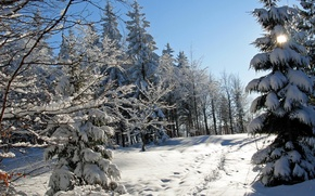 Картинка зима, снег, деревья, следы, природа, фото, ель