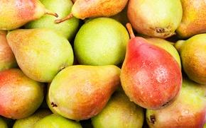 Обои pears, фрукты, fruits, груши