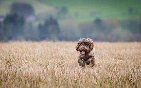 Картинка собака, бег, атлетика